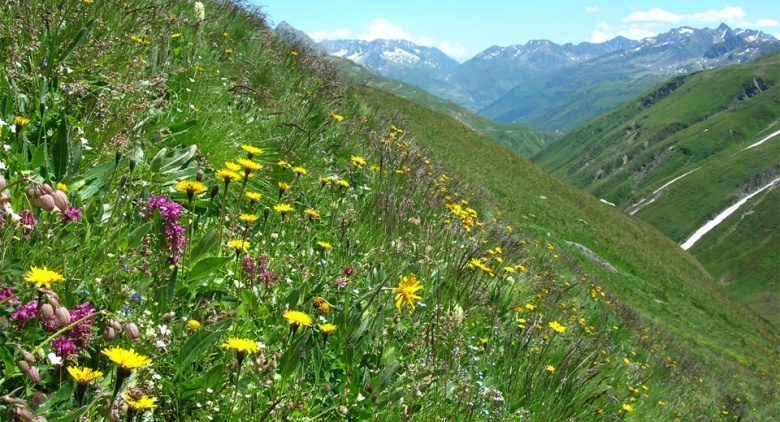global-mountain-biodiversity_1