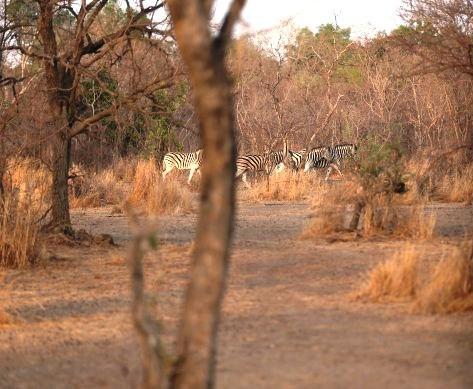 sumu wildlife park bauchi social prefect4