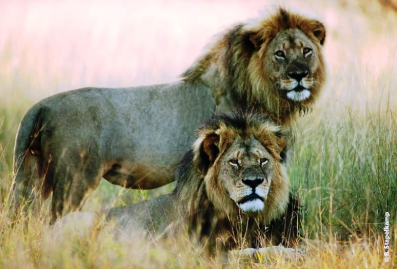 Cecil and Xanda