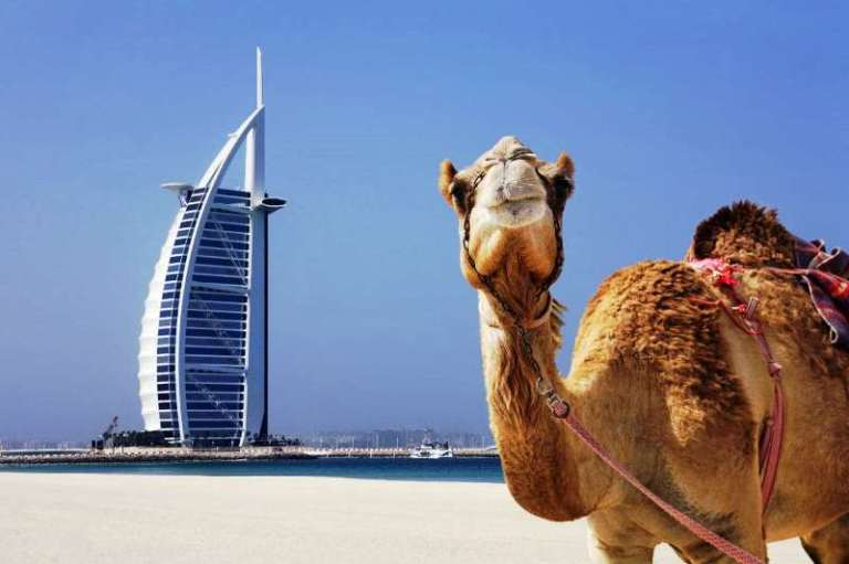 dubai camel burj al arab-xlarge