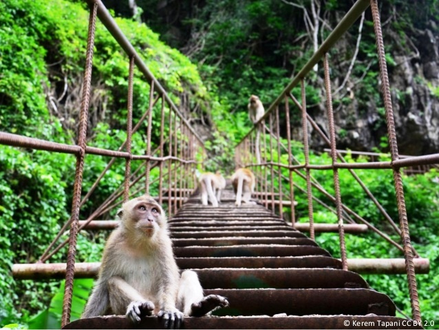 THAILAND khao-sok-national-park-thailand-5-638