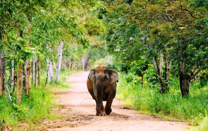 Thailand kui_buri_national_park