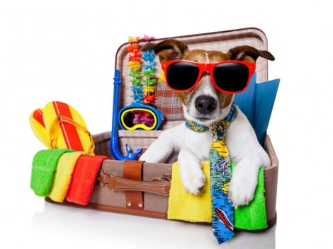 dog pet-travel-suitcase-dog-1100x825