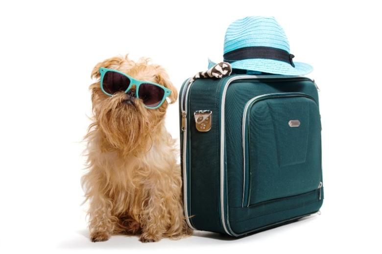 Dog traveler