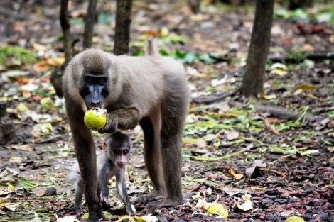 damilare - discoveria - nigeria travel chat - monkey