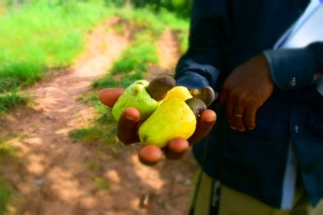 Ngwo Forest - Cashew Fruits - Sam Adeleke