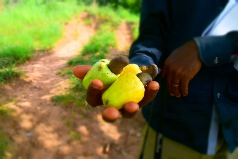 Ngwo Forest - Cashew Fruits - Sam Adeleke