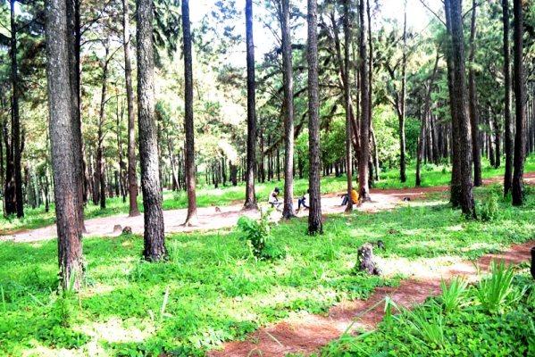 NGWO-PINE-FOREST-2-1 - Sam Adeleke