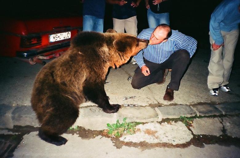 bear watching-2