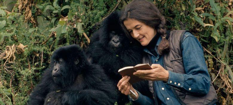 Diane-Fossey