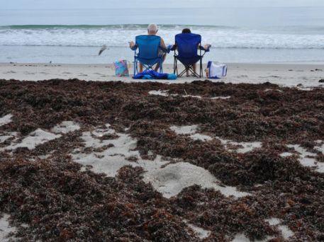 seaweed-2